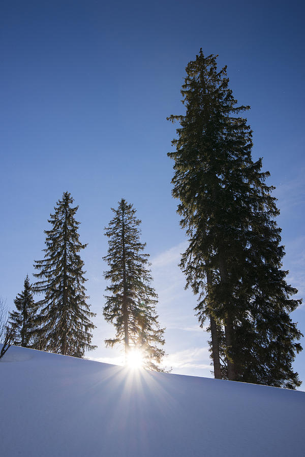 Beautiful Trees On A Sunny Winter Day Photograph