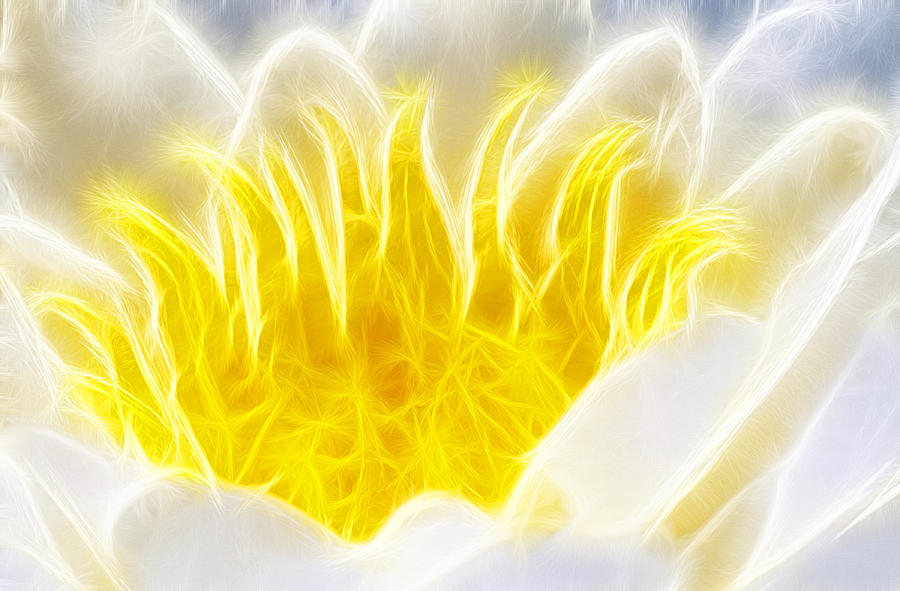 Beautiful White And Yellow Flower - Digital Artwork Photograph