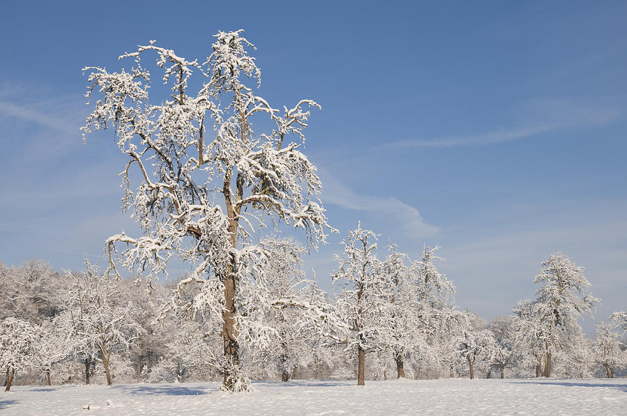 Beautiful Winter Day With Snow Covered Trees And Blue Sky Photograph