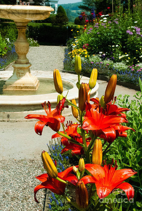 Beautiful Yellow And Orange Flowers Rockefeller Mansion And Gardens Woodstock Vermont Photograph