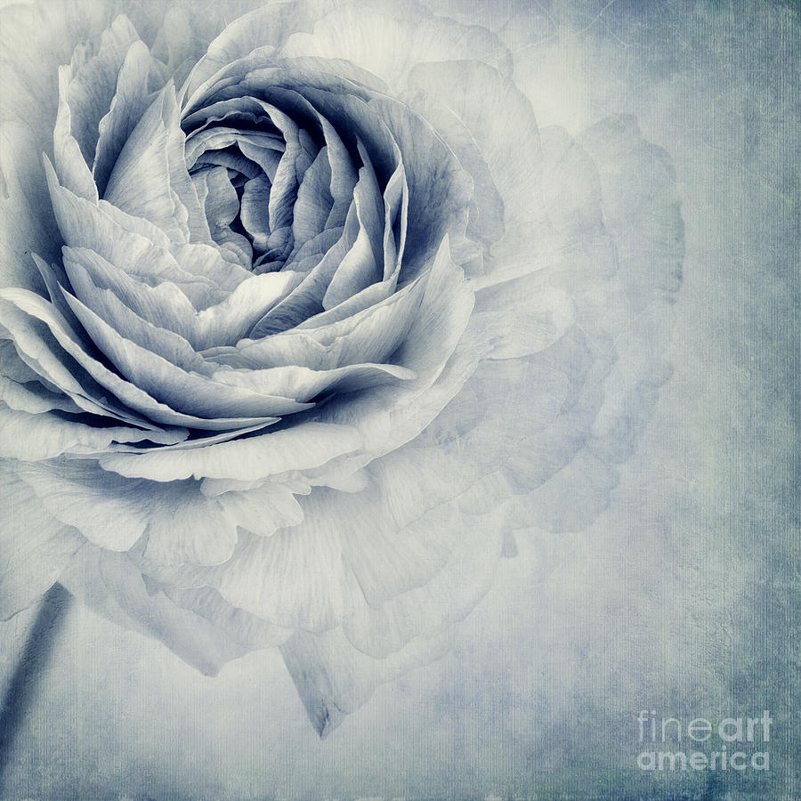 Beauty In Blue Photograph  - Beauty In Blue Fine Art Print