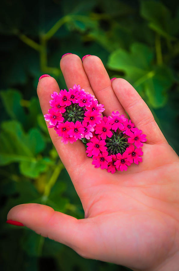 Beauty In Her Hands Photograph