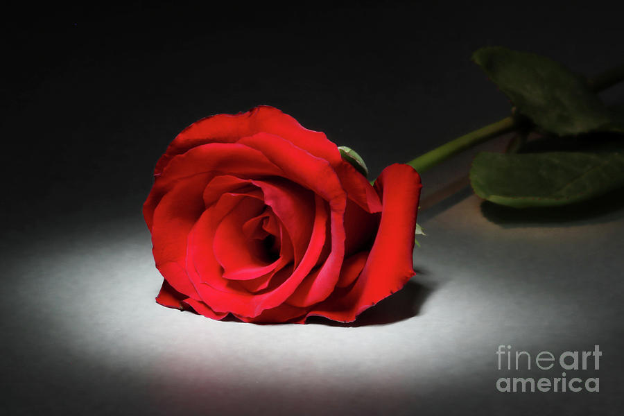 Beauty In The Spotlight Photograph  - Beauty In The Spotlight Fine Art Print