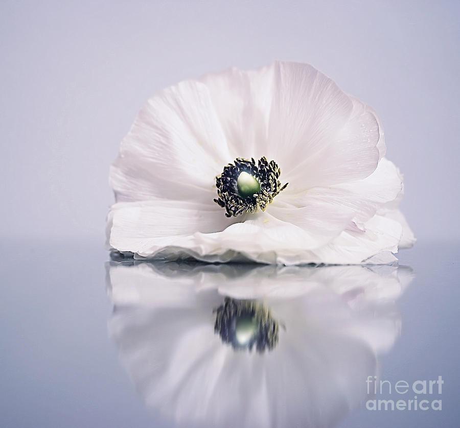 Beauty Photograph