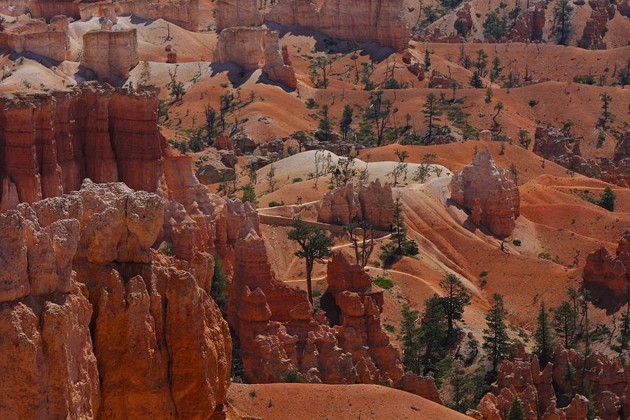 Beauty Of Bryce Photograph