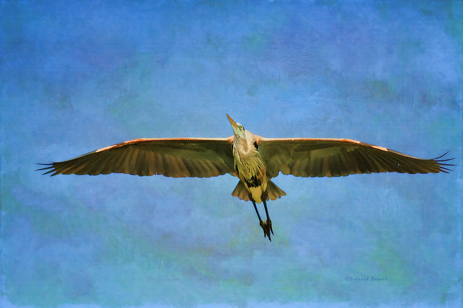 Beauty Of Flight Textured Photograph  - Beauty Of Flight Textured Fine Art Print
