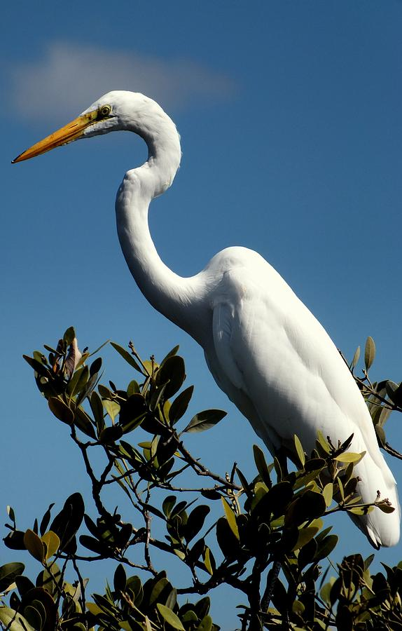 White Birds Photograph - Beauty Of Sanibel by Karen Wiles