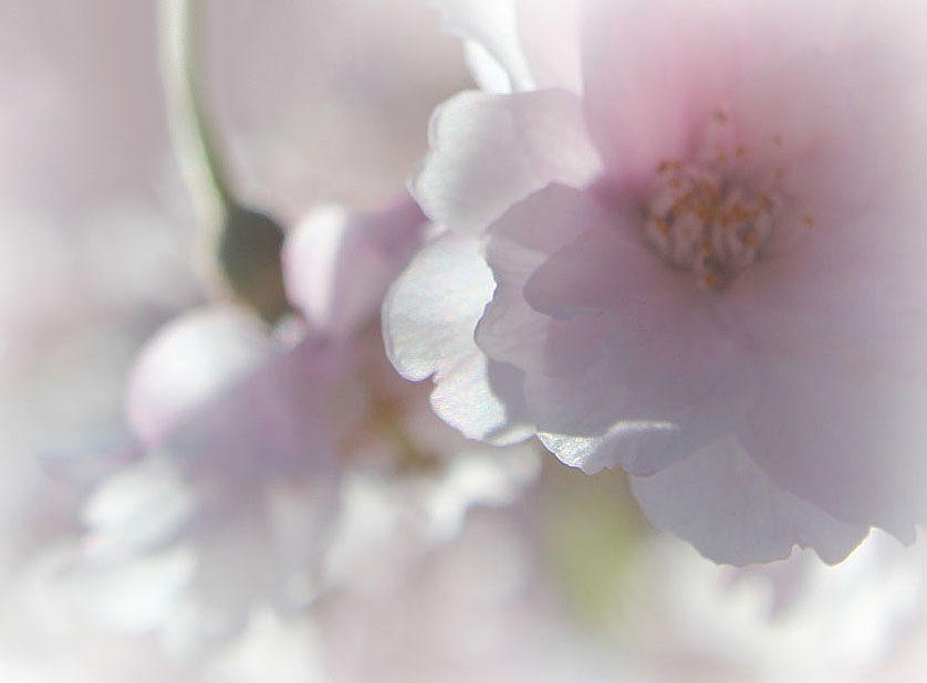 Beauty Of Spring Photograph  - Beauty Of Spring Fine Art Print
