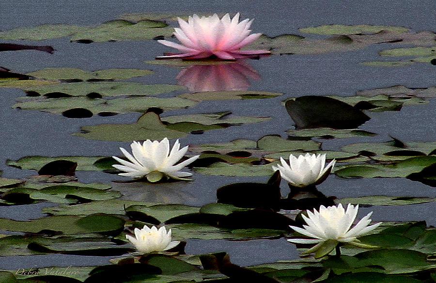 Beauty Of The Lake Photograph