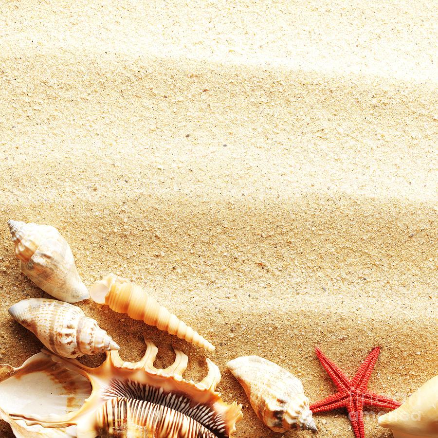 Beauty Sea Shell Photograph
