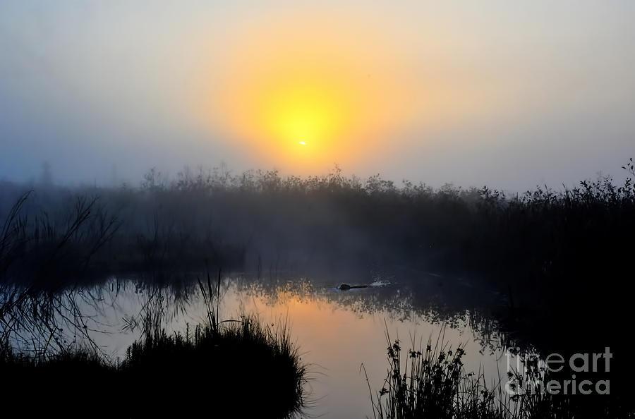 Beaver At Beaver Dam In Morning Photograph