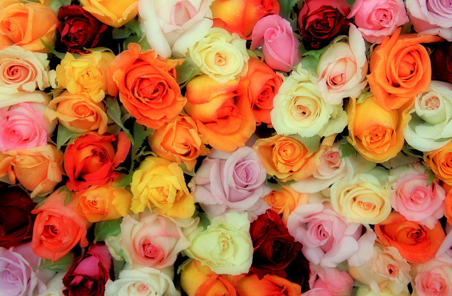 Roses Photograph - Bed Of Roses by Tony Grider