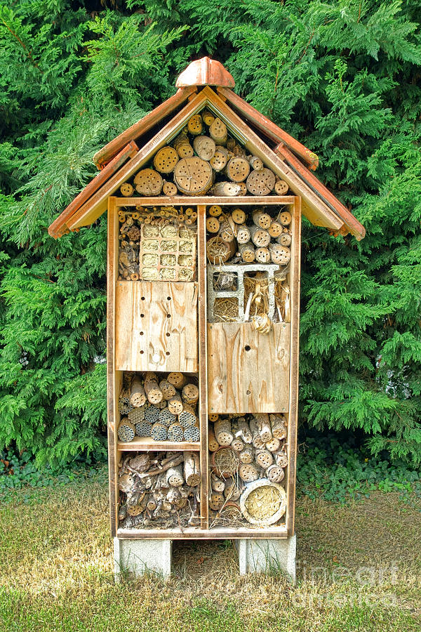 Bee House Photograph