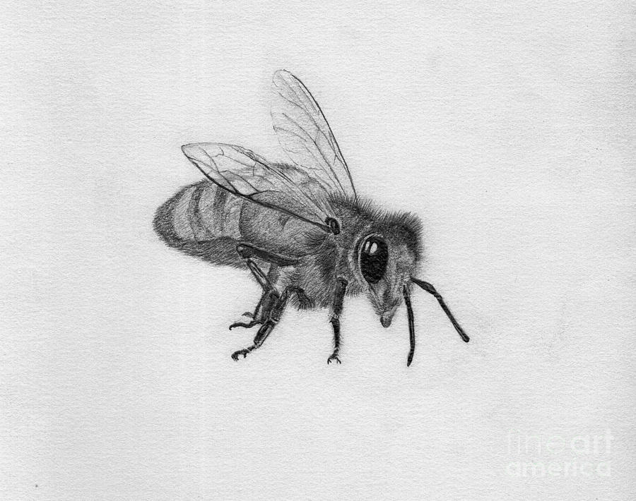 Bee Pencil Drawing Drawing  - Bee Pencil Drawing Fine Art Print