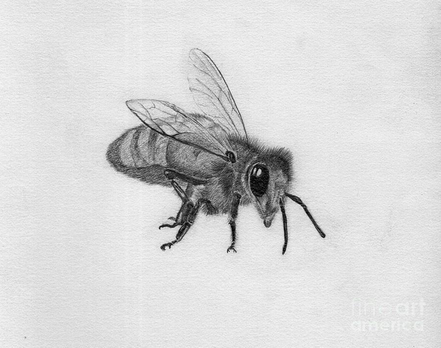 Bee Pencil Drawing Drawing