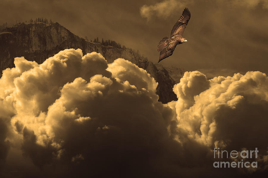 Before Memory . I Have Soared With The Hawk Photograph  - Before Memory . I Have Soared With The Hawk Fine Art Print