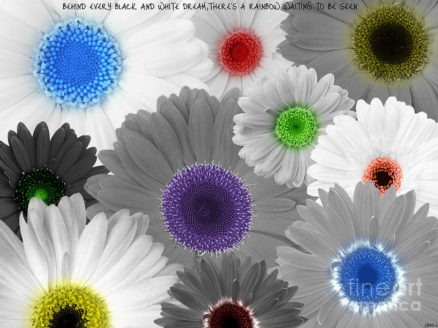 Flowers Digital Art - Behind Every Black And White Dream Theres A Rainbow Waiting To Be Seen by Janice Westerberg