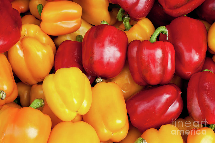 Bell Peppers Photograph  - Bell Peppers Fine Art Print