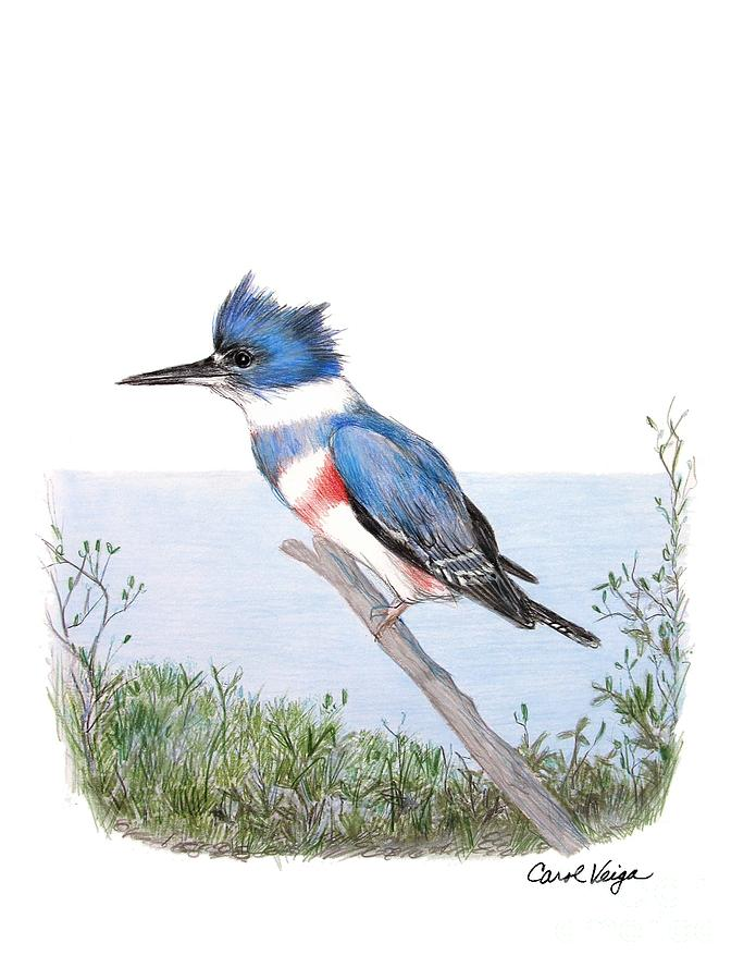 Line Drawing Kingfisher : Belted kingfisher drawing by carol veiga