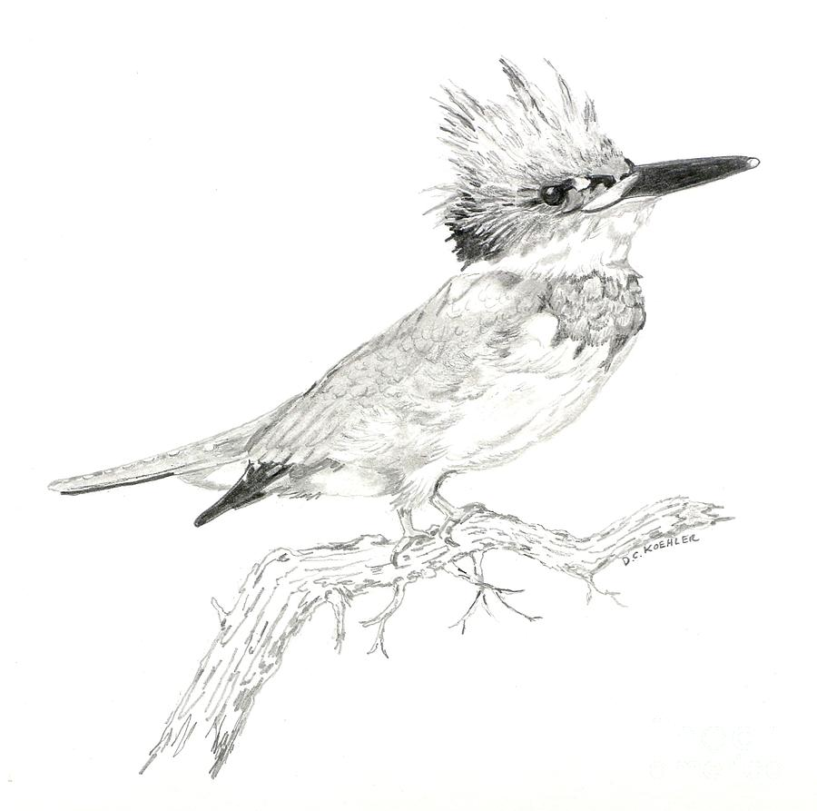 Line Drawing Kingfisher : Belted kingfisher drawing pixshark images