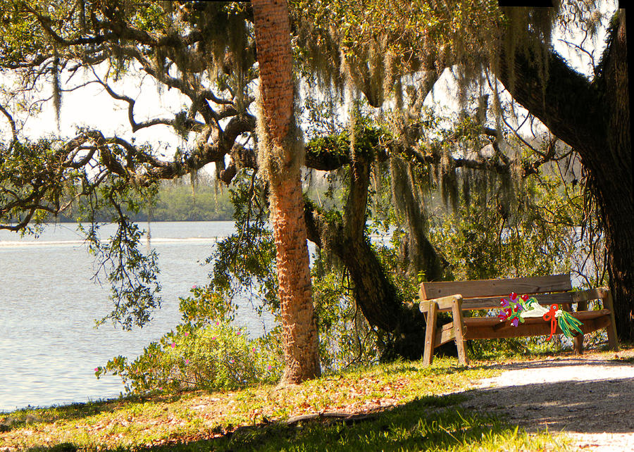 Bench By The Lake Photograph  - Bench By The Lake Fine Art Print