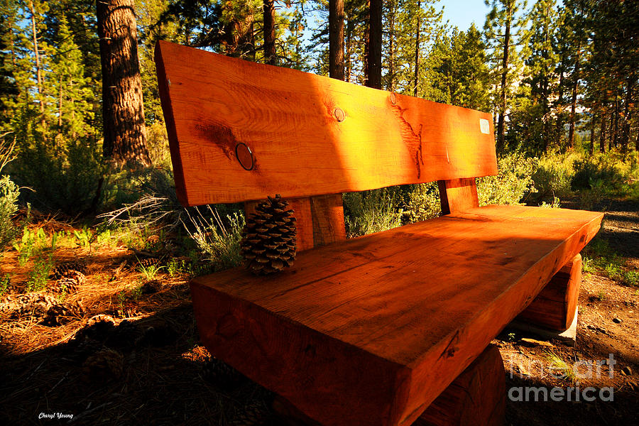 Bench In The Woods Photograph