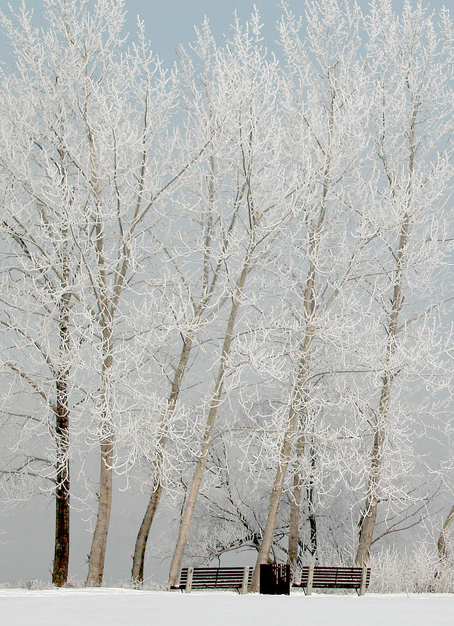 Benches And Hoar Frost Trees Photograph