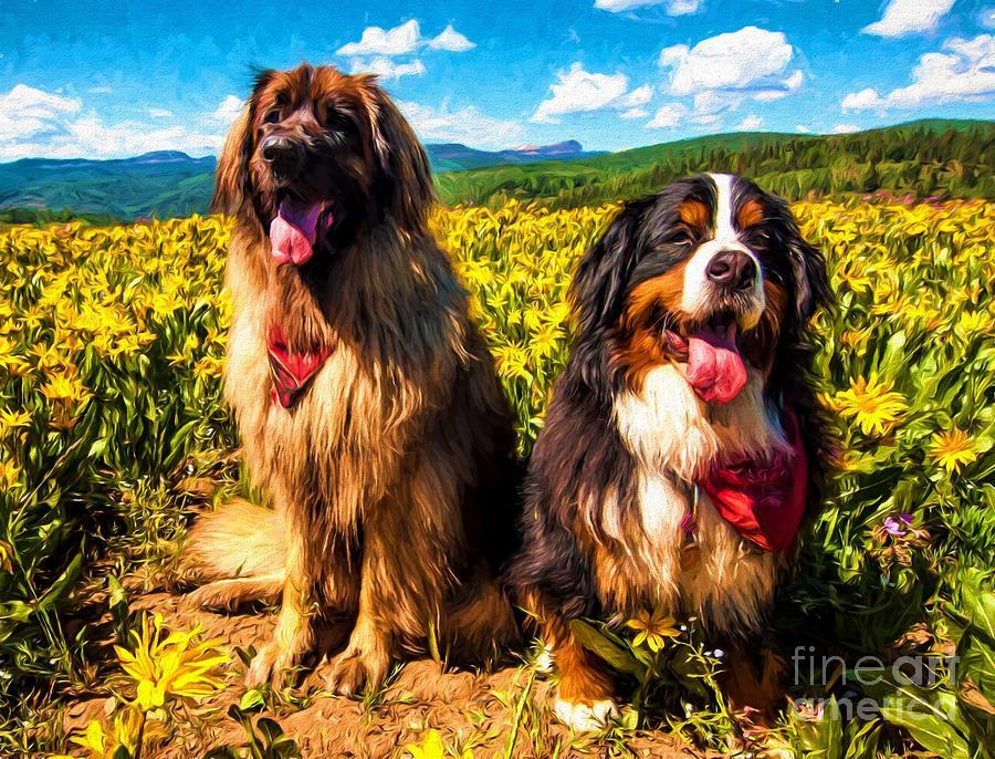 mountain german dog leonberger dog breeds picture
