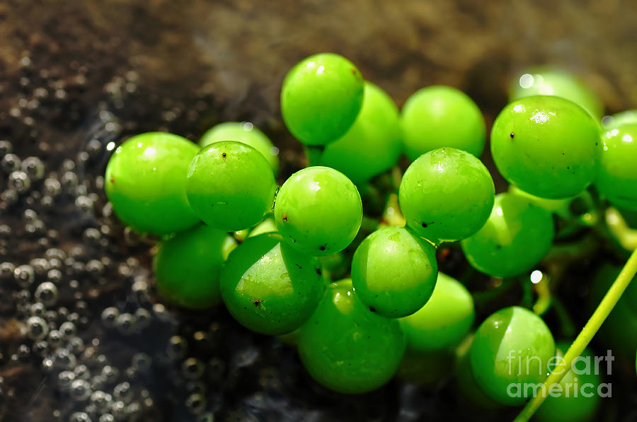 Berries On Water Photograph