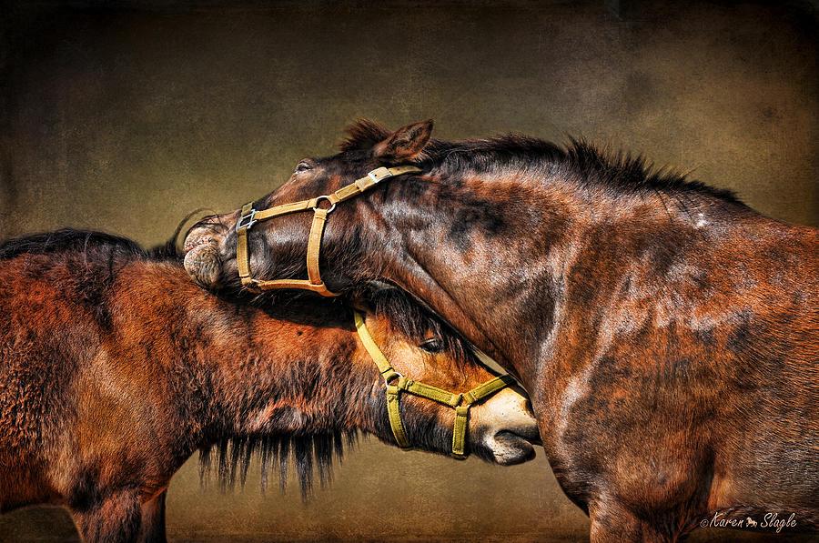 Miniature Horse Photograph - Best Friends Forever by Karen Slagle
