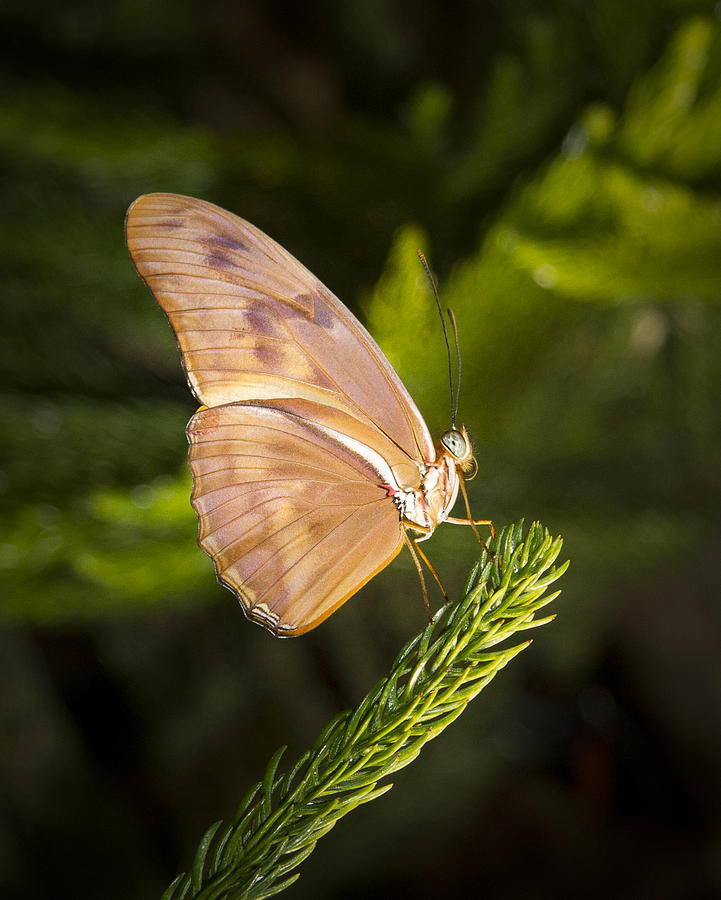 Best Side Of The Butterfly Photograph