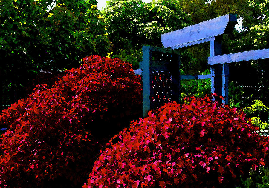Beyond The Garden Gate Photograph