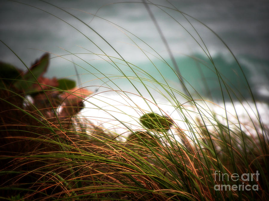 Beyond The Grass Photograph  - Beyond The Grass Fine Art Print