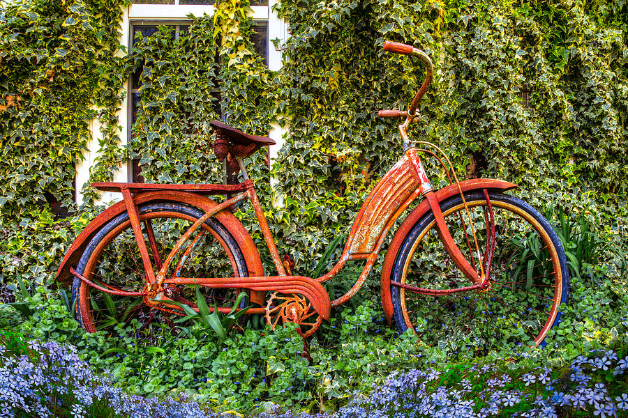 Bicycle In The Garden Photograph
