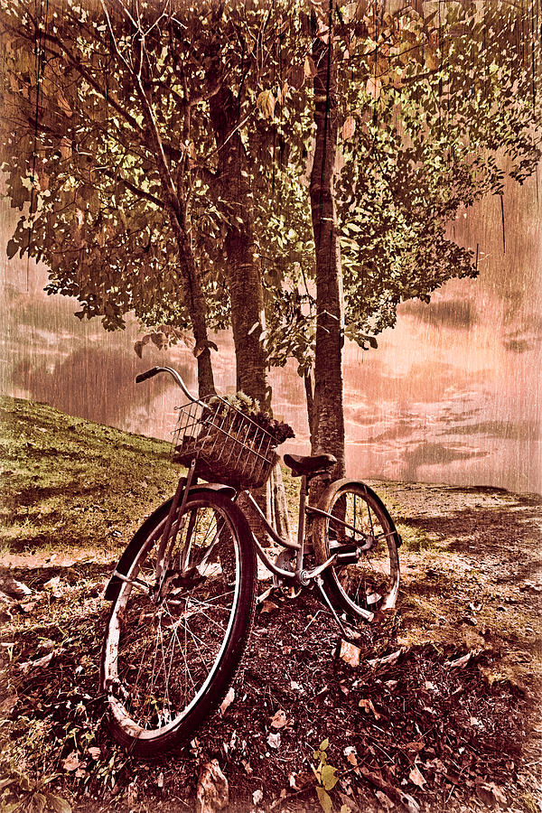 Appalachia Photograph - Bicycle In The Park by Debra and Dave Vanderlaan