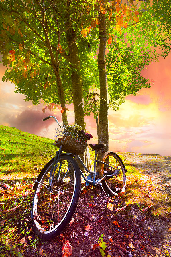 Appalachia Photograph - Bicycle Under The Tree by Debra and Dave Vanderlaan