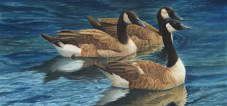 Canadian Geese Painting - Biding Time by Tammy  Taylor