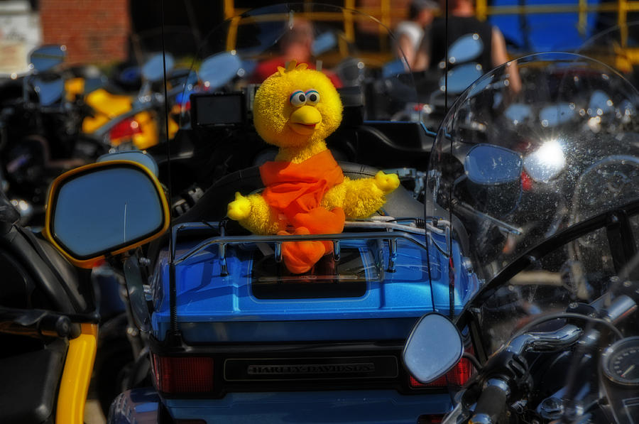 Big Bird Photograph