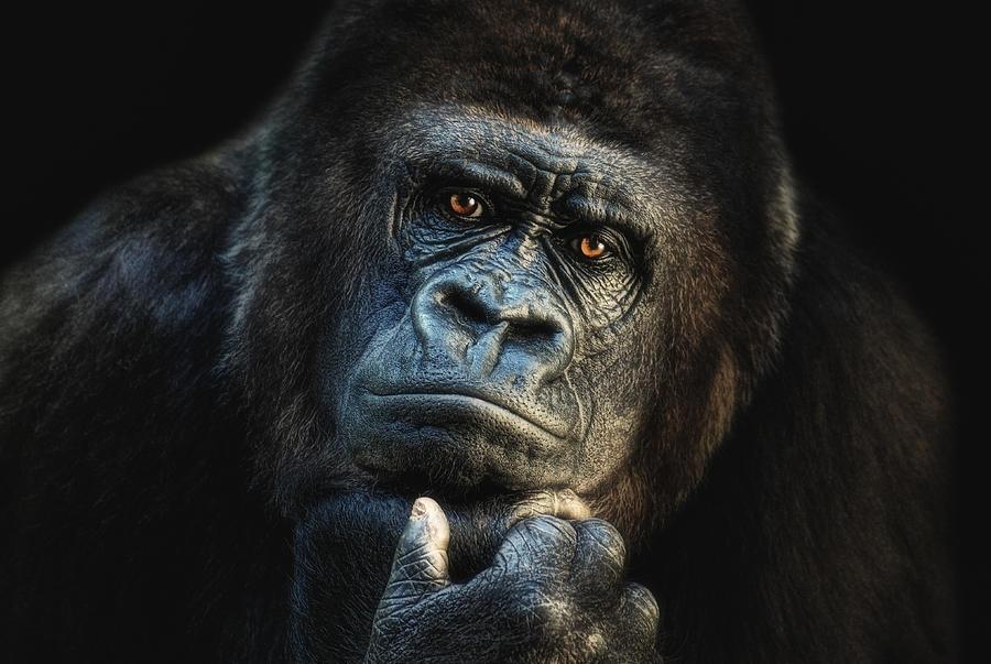 Hominidae Photograph - Big Dreamer by Joachim G Pinkawa