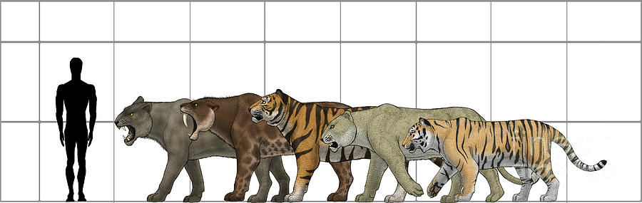 Big Felines Size Chart Digital Art