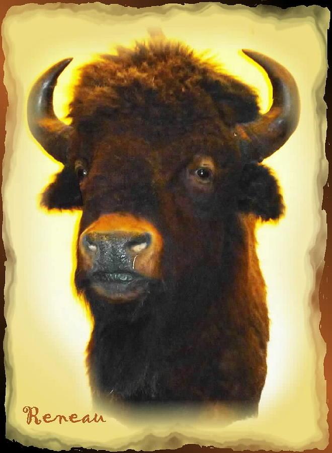 Big Game Trophy - Buffalo Photograph