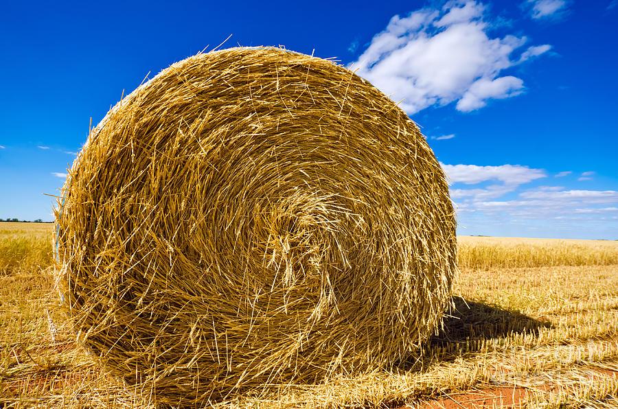 Big Straw Bales Photograph