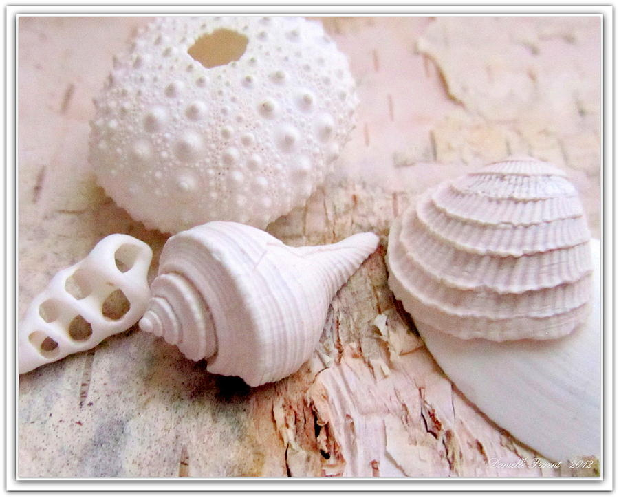 Birch And Shells Photograph