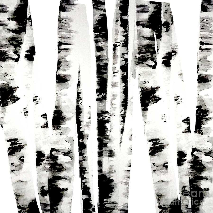 Birch Trees Digital Art  - Birch Trees Fine Art Print