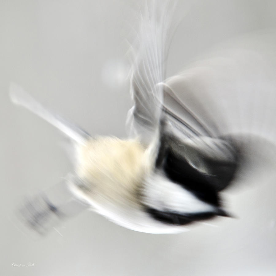 Bird Abstract Motion Blur Photograph  - Bird Abstract Motion Blur Fine Art Print