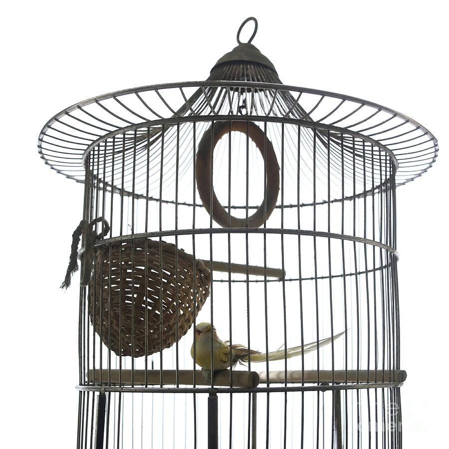 Bird Cage Photograph