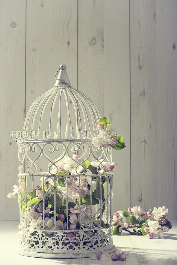 Birdcage Photograph - Bird Cage by Amanda Elwell