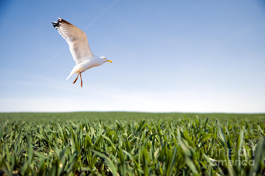 Bird Flying Over Green Grass Photograph