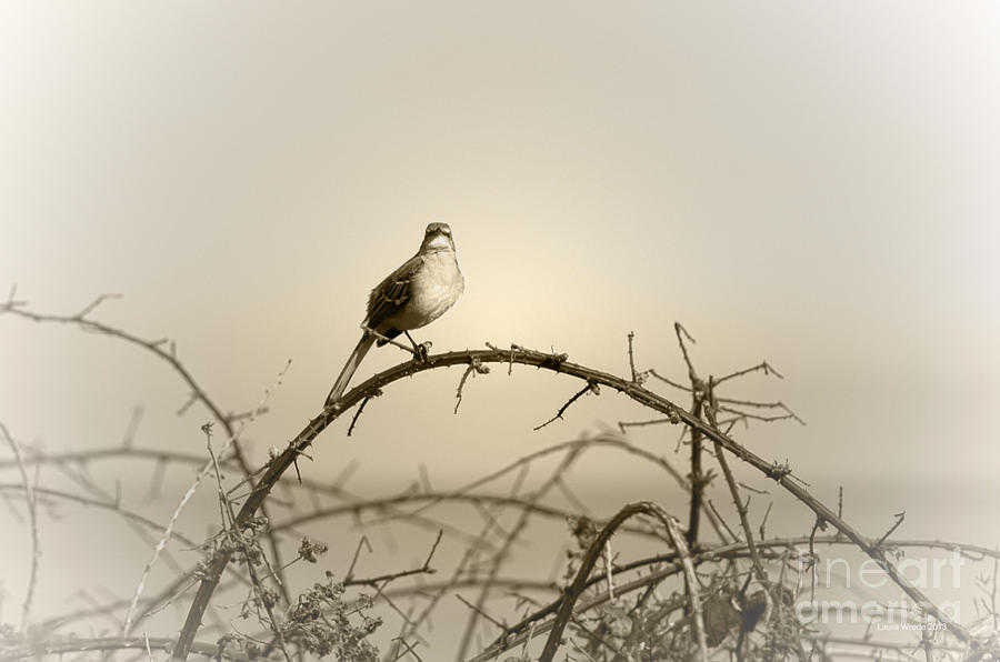 Bird In The Briar Photograph