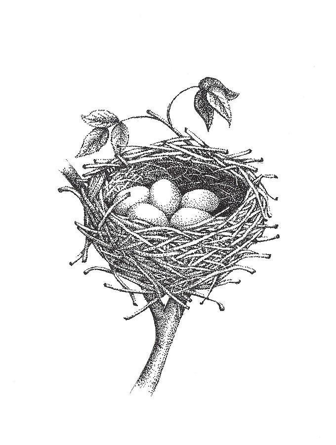Bird Nest Illustrations, Royalty-Free Vector Graphics